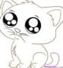 latinagirl: (white cat)