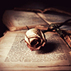 angstchic: Rose on book archaic (Default)