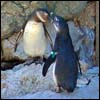 penguinpics: (Default)