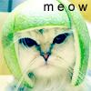 kittylitter1: (meow)