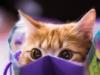 ravenjester: Scardy Cat (pic#11255531)