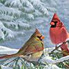 magic_art: (winter cardinals)