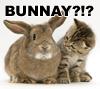 was_tansu_now_badhedgehog: (bunnay)