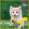 wxkat: (kitten)