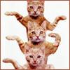 wxkat: (3cats)