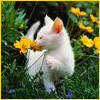 wxkat: (kittenwhite)