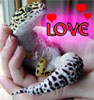 mowglikat: (Love)
