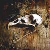 riiva: (skull)
