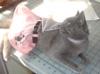carmenbeaudry: (kitten)