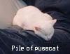 abendgules: (pile of pusscat)