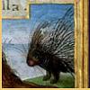 abendgules: (prickly)