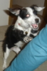 m0rbidm00n: (kira puppy)