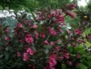 marianrose: (rose)