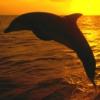 talismancer: (Dolphin)