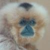 talismancer: (Monkey)