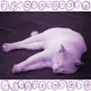 purplefluffycat: (Purple Cat)