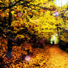 periwinklemist: (autumn 2)