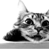 periwinklemist: (cat)
