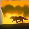 furan_chaos: (atardecer, lobo)