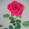 missangelique999: my photo (beauty)