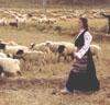 lisaspieces: (sheep)