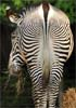 erbie: (zebrabutt)