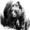 tribhanga: (bear)