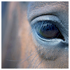 dance_of_flame_import: (Horse eye)