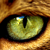 nadjarachel_import: (Cat Eye)