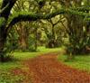razzleccentric: (Forest Path)