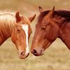 birdienl: (Horses)