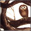 flying_kangaroo: (Trina Schart Hyman --owl)