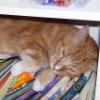 mandie_rw: (literate-cat)