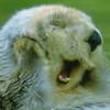 mamagotcha: (otter)