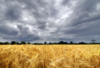 rio_luna5: (wheat field & storm)