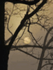 rio_luna5: (tree and moon)