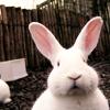 0onie: (bunny)