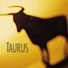kushielsfire: (Yellow Taurus)