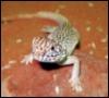 sorinverse: (kukara lizard - Sorin)