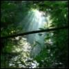 sorinverse: (rainforest)