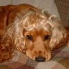 mlsdesigns: (puppy)