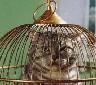 thekyttn: (grumpy-caged)