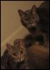 thekyttn: (cats, curious)