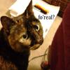 chatastic: (Sabrina Fo Real)