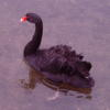 enismirdal: (erestor swan 2 (my own picture!))