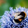 enismirdal: (Bee!11)