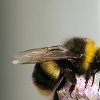 enismirdal: (Bee!12)