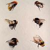 enismirdal: (Bee!14)