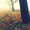 fleurdeliseebckp: (autumn)