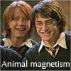 shocolate: (Animal magnetism)